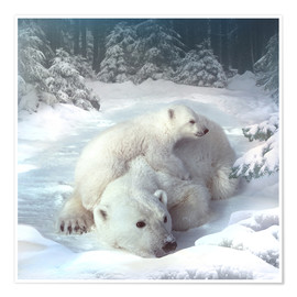 Premiumposter Polar bears