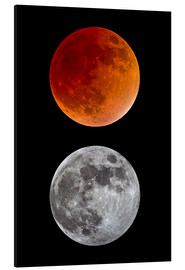 Aluminiumtavla  blood moon-super moon-full moon - MonarchC