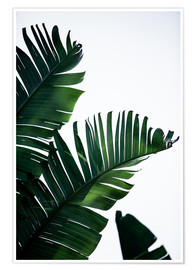 Premiumposter Palm Leaves 16