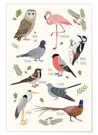 Premiumposter  Bird Species - English - Kidz Collection