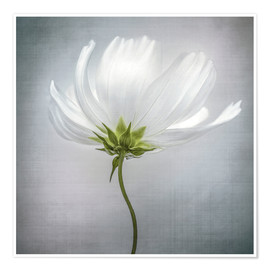 Poster  Cosmos - Mandy Disher