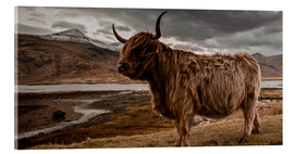 Akrylglastavla  Highland cattle - Art Couture