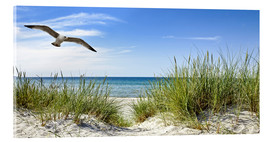Akrylglastavla  Seagull flight over sand dunes, Baltic Sea - Art Couture