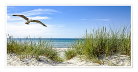 Premiumposter Seagull flight over sand dunes, Baltic Sea